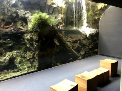 京都水族館の涼しい展示