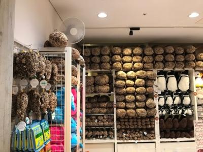 京都水族館のショップ、オオサンショウウオがめちゃ多い