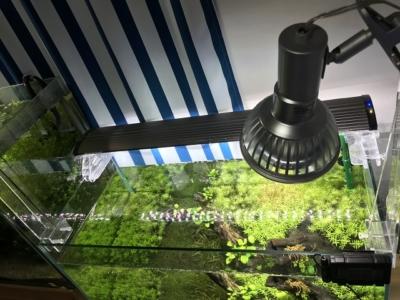 グラッシーレディオRX122と水草水槽