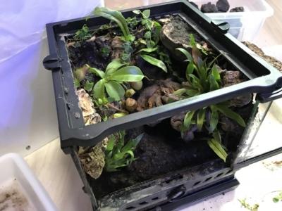 テラリウム製作中、植物を植え終わった