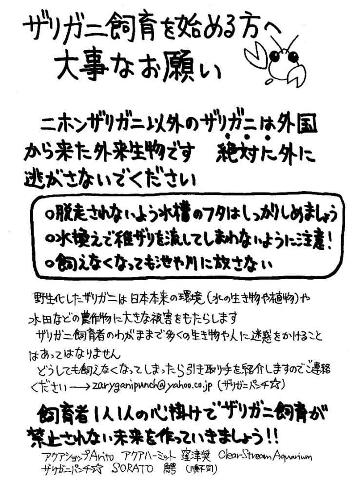 ザリガニ飼育を始める方へ大事なお願い(ザりガニパンチ)