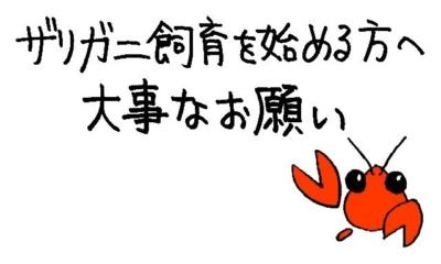 ザリガニ飼育を始める方への大事なお願い(ザりガニパンチ☆)