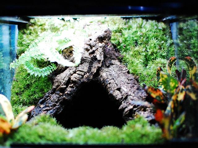 木の巣穴のテラリウム