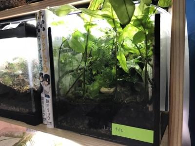 植物が繁茂したテラリウム