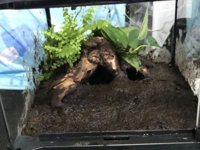 植物を植え終わったテラリウム