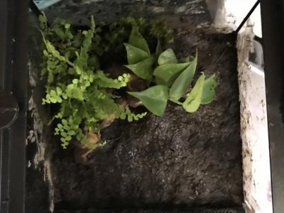 植物を植え終わったテラリウム(上から見た様子