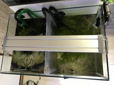 コトブキ フラットLED400を45cm水槽に設置した様子(上から)