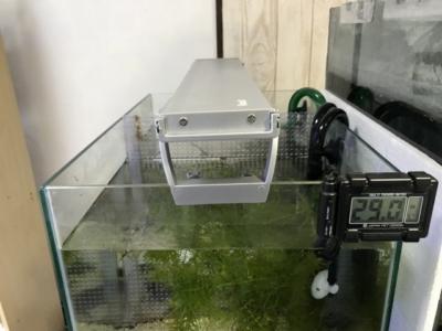 テトラLEDスライドライトが取り付けられた水槽(横から)