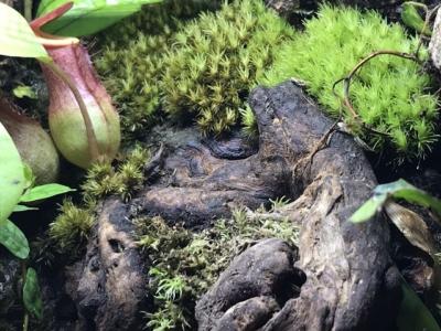 緑が増えた苔