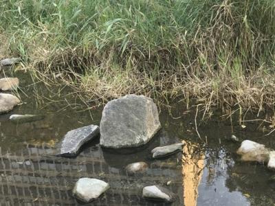 ザリガニが生息している池