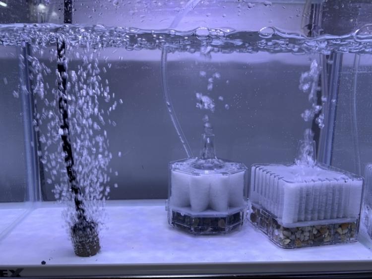 水作のエアーポンプ「水心 2S」エアーストーンと投げ込み式フィルター接続時