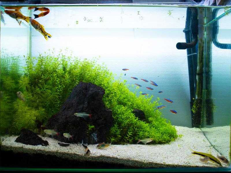 45cm石組水草水槽