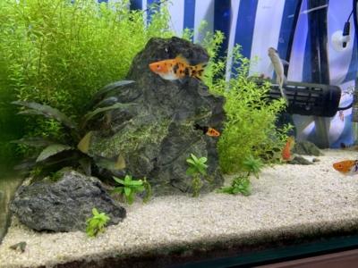 石組水草水槽