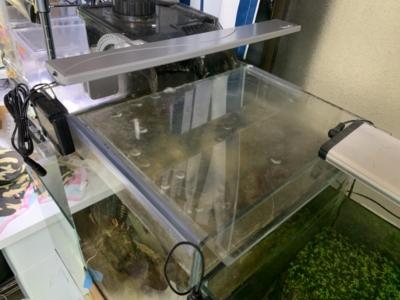 テトラLEDフラットライト、30cm水槽にセットしたイメージ