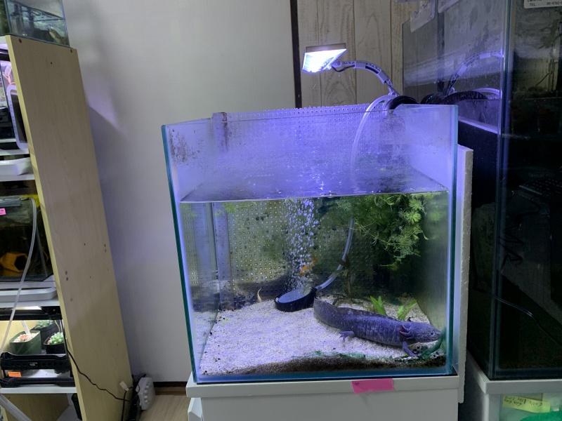 テトラLEDフラットライト、45cm水槽で使用した場合、横から