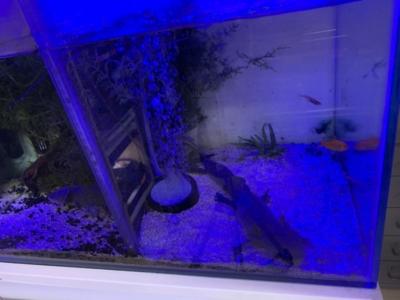 テトラLEDフラットライト、点灯(ON、青LEDのみ