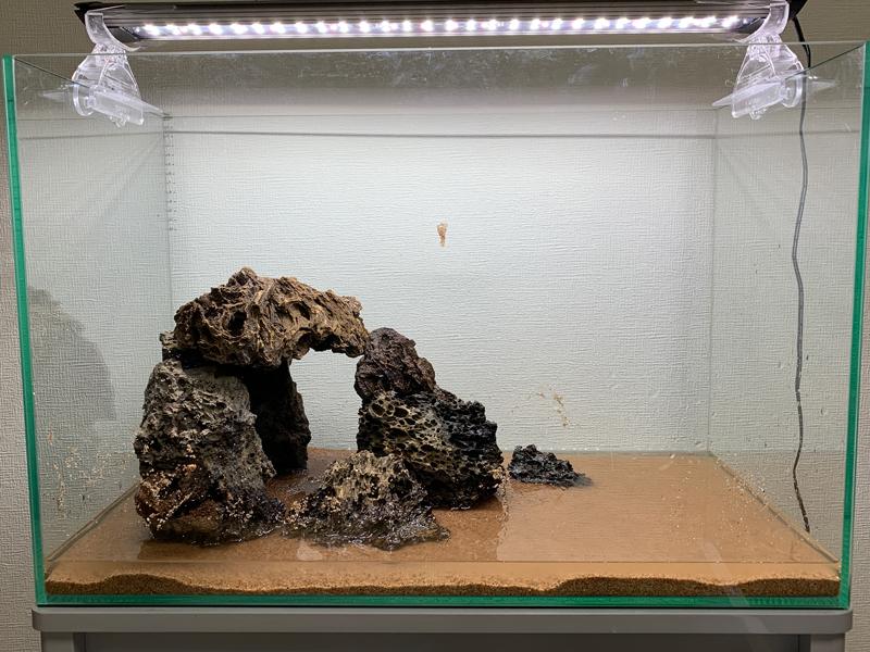 石組中のレイアウト水槽