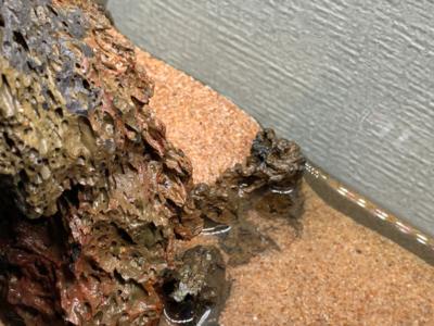 石で砂利を盛り上がらせている様子