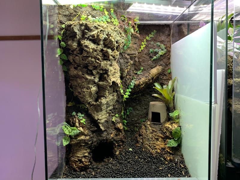 植物を植栽し終わったパルダリウム