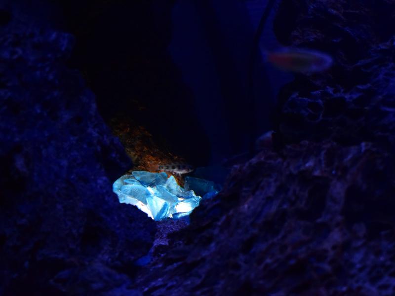 ガラスガレットで灯される洞窟と魚