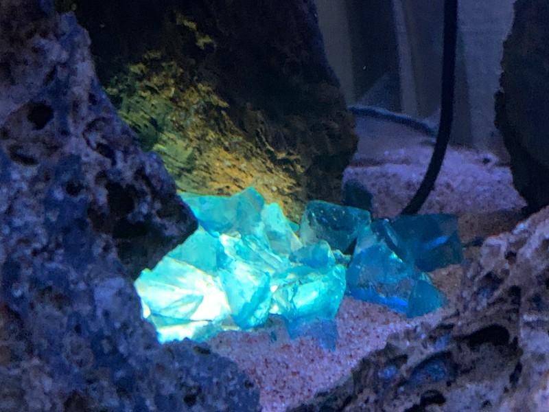 水槽内で点灯しているガラスカレット