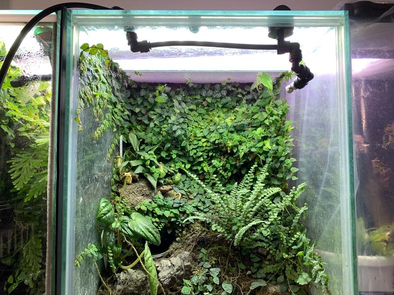 ミスティングシステム:フォレスタ(foresta)のノズルを設置した様子