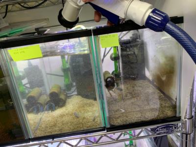 ザリガニ水槽に水を注水している様子、その2