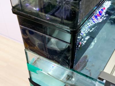 グランデカスタムを加工してオールガラス水槽に使っている様子