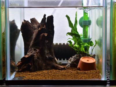 アピストの飼育水槽例