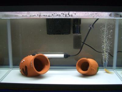 ウーパールーパー水槽のタコツボ