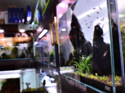 熱帯魚ショップ